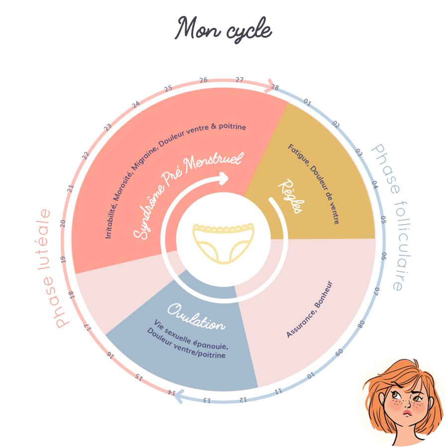 Les phases du cycle menstruel
