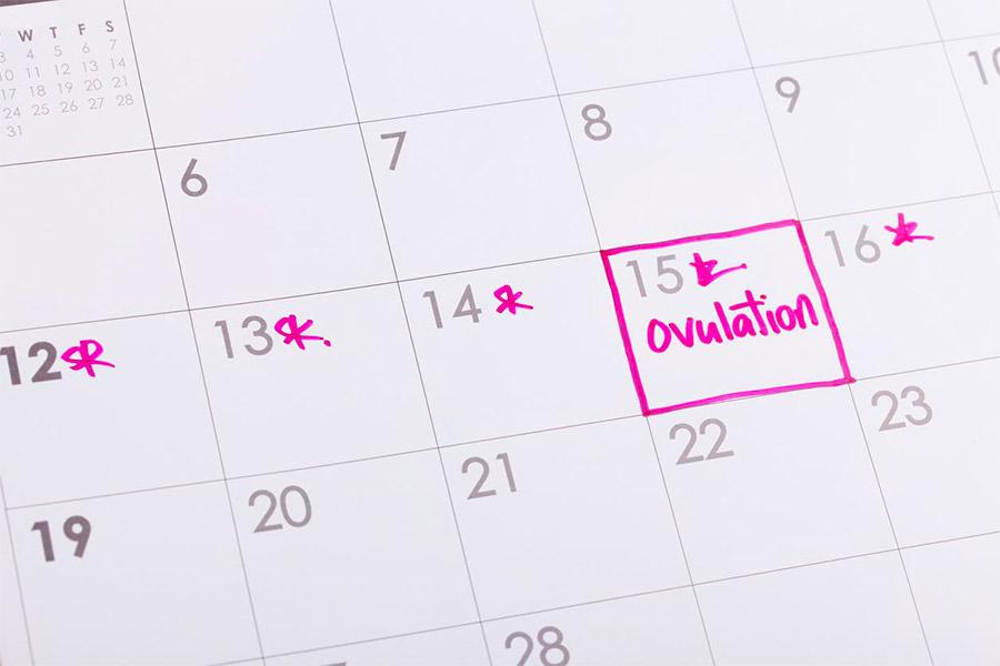 Comprendiendo el calendario femenino